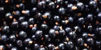 Tajemnicze jagody Maqui